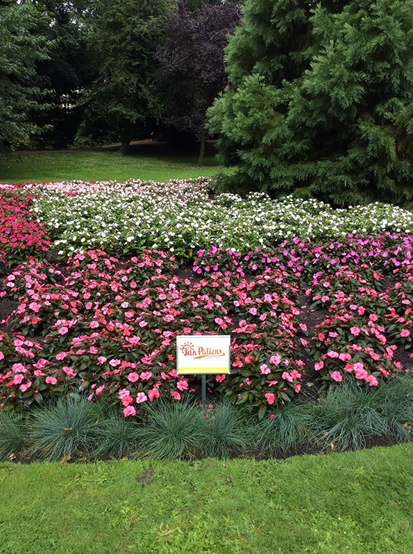 SunPatiens is the future for parks bedding