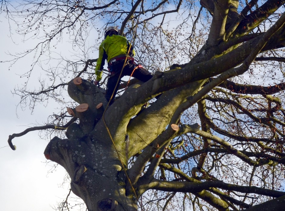 "Bawden achieves coveted ""˜Approved Contractor' status for tree surgery work"