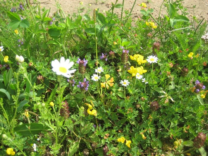 Instant wildflower meadows at Tillers Turf Open Day