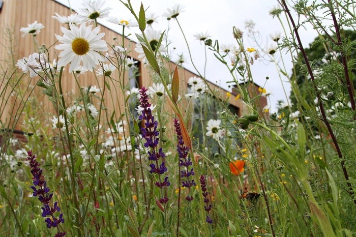 Pictorial Meadows turf makes an impact