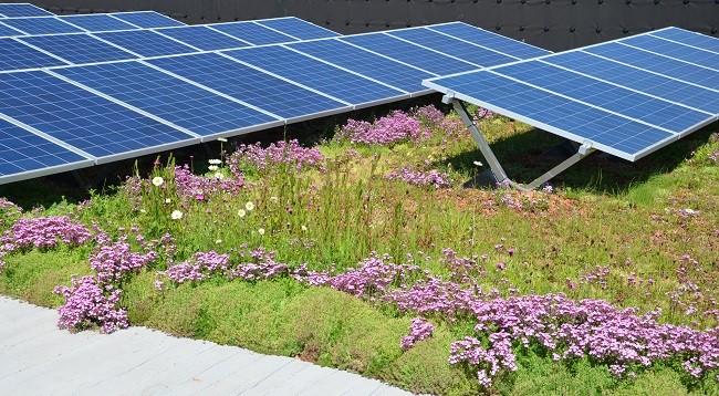 Bauder launches BioSOLAR green roof