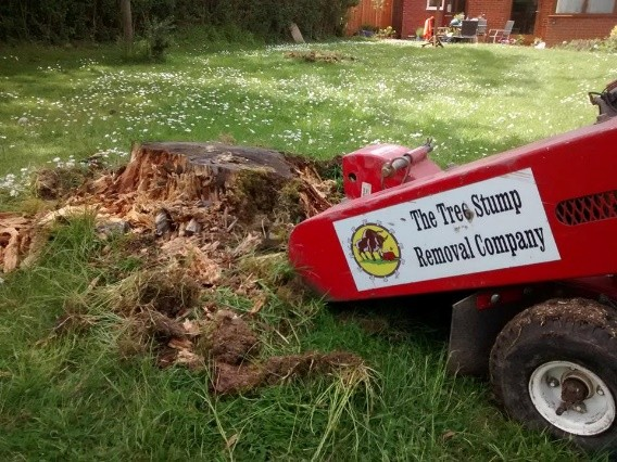 Tackling tree stump removal with the specialists