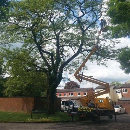 Glendale providing arboricultural services on behalf of Aster Group.