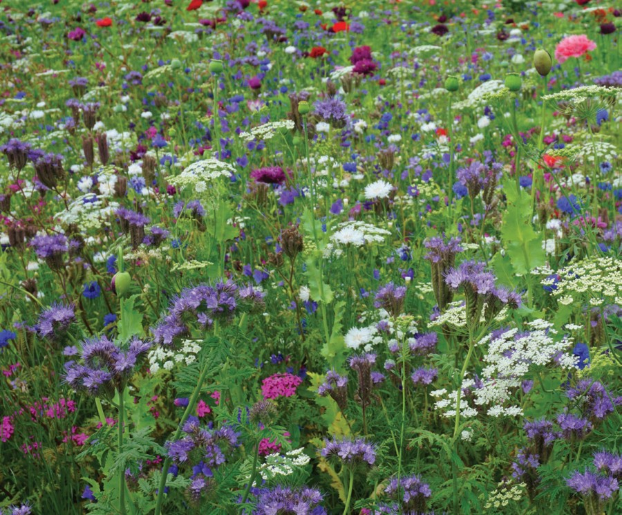 New Magic Meadows from Pictorial Meadows