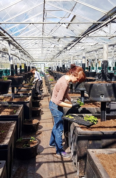 Plantscape targets new sectors