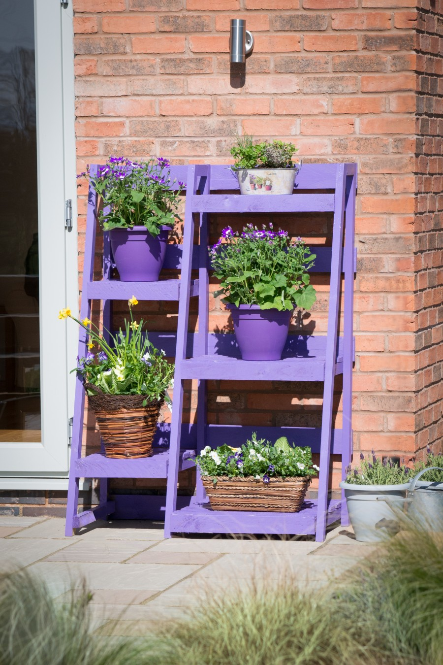 Give Your Garden the Power of Purple with Pantone's Colour of 2018 –  Ultra Violet!