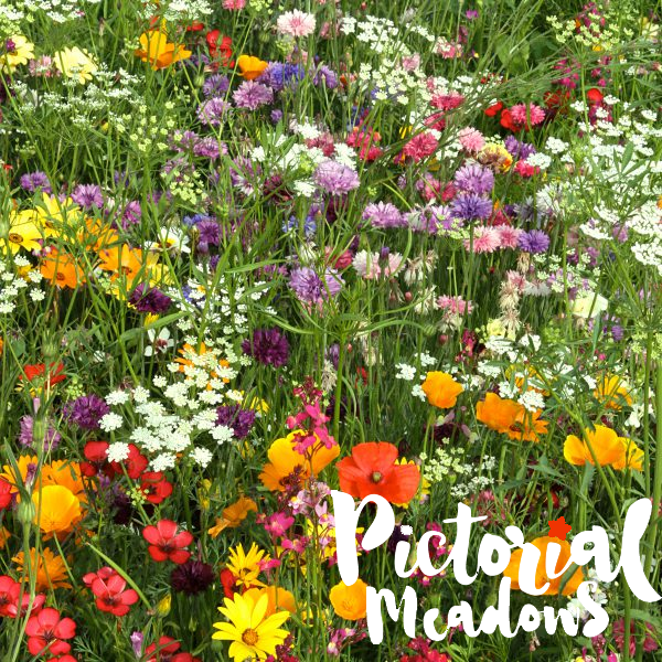 Pictorial Meadows does Black Friday