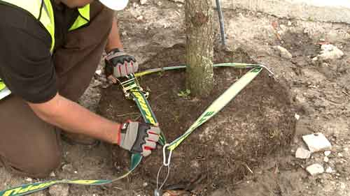Gripple tree anchoring kits make landscapers' lives easier and faster
