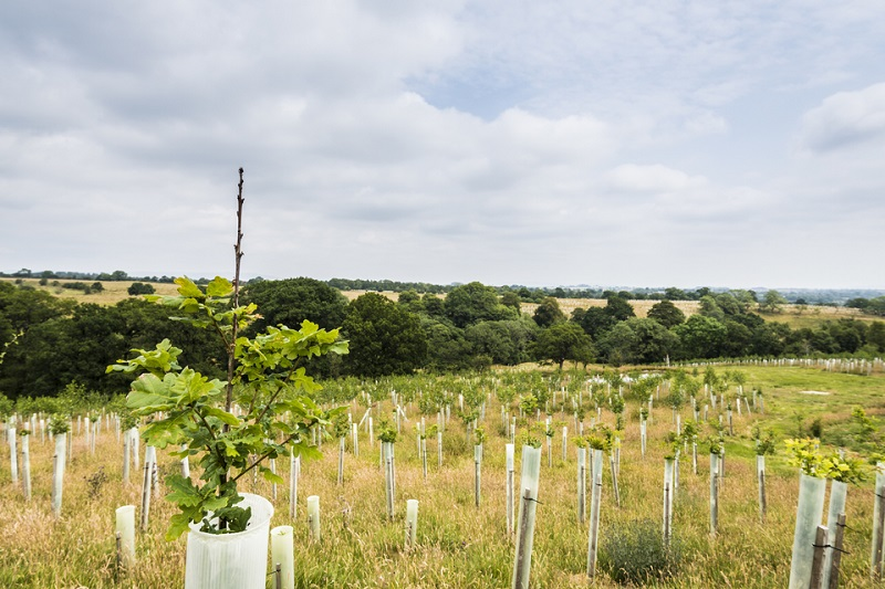 New £10m fund  to boost tree planting