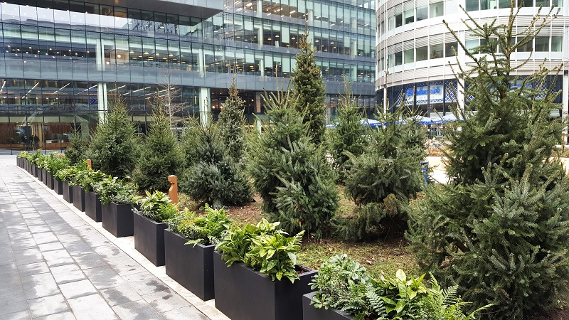 Christmas trees delivered to vibrant destination