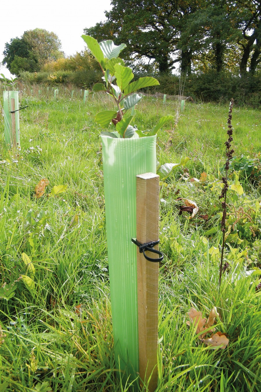 ALS are delighted to announce the launch of Whiptec tree shelters