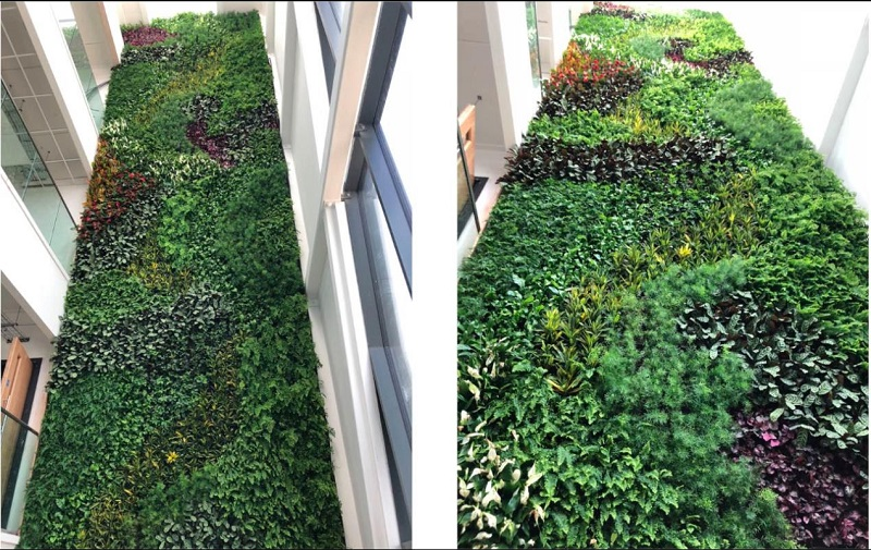 Living wall brings new sustainable university building to life‏