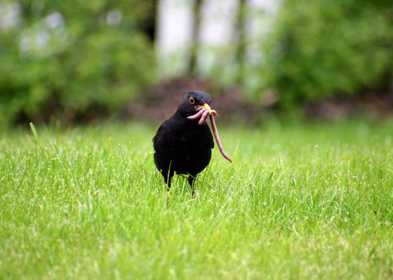 The importance of lawns for biodiversity