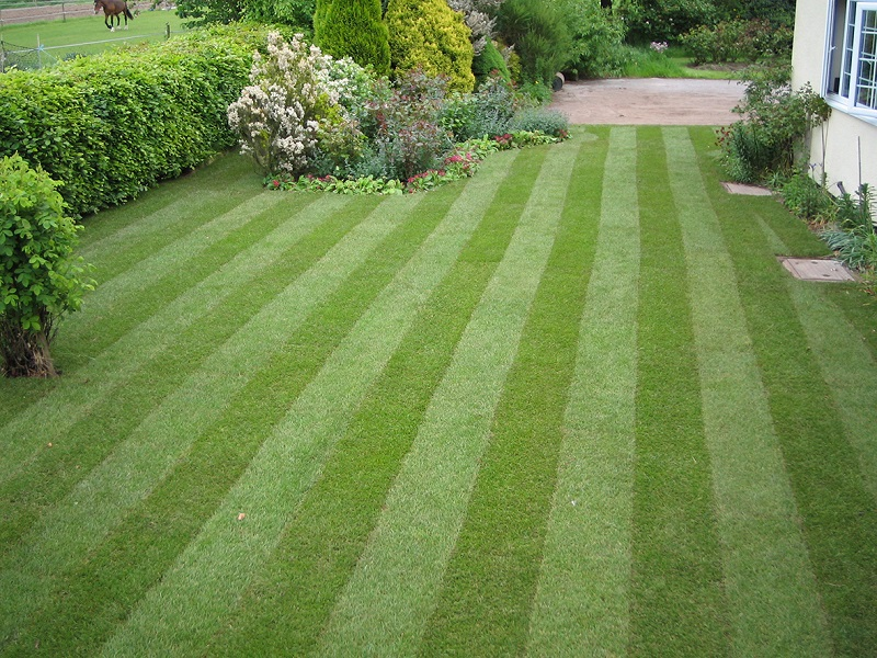 Lawncare is a breeze with DJ Turfcare's MO Bacter