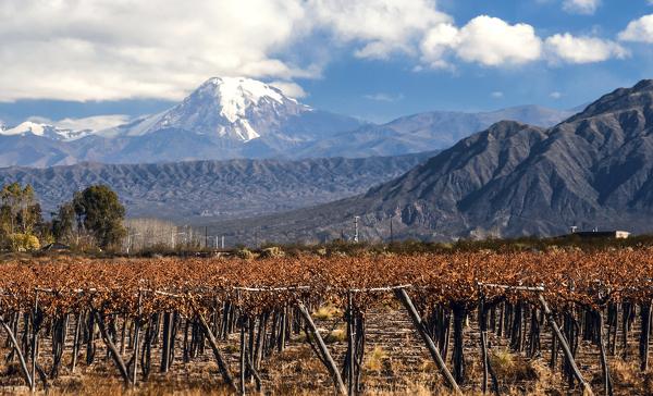 Weinreben vor dem Vulkan Aconcagua
