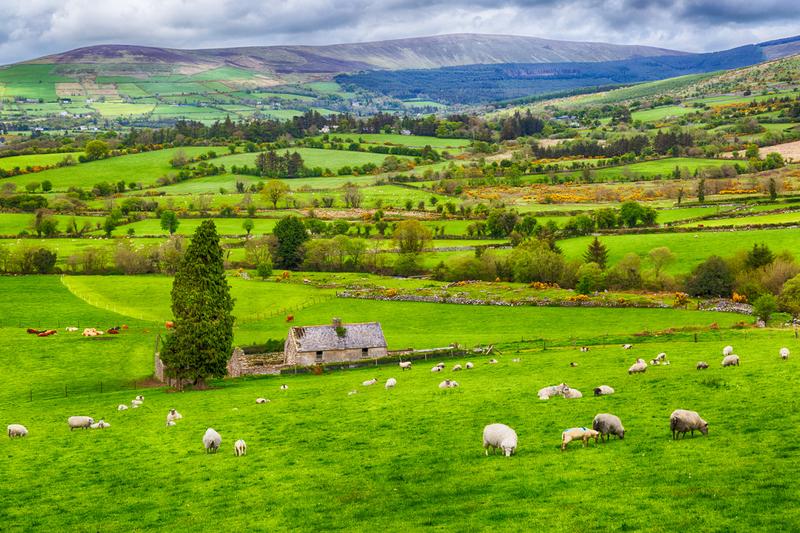 Hügellandschaft im County Wicklow