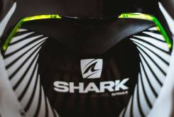 Shark Skwal6