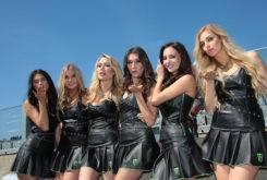 Paddock Girls