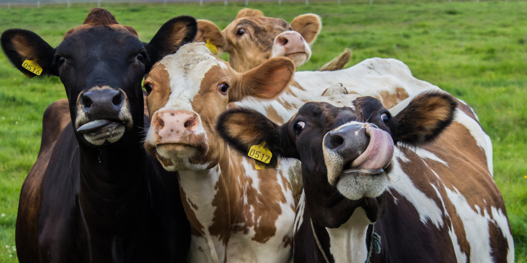 'Herd mentality' of group photos wears thin whilst country life dating