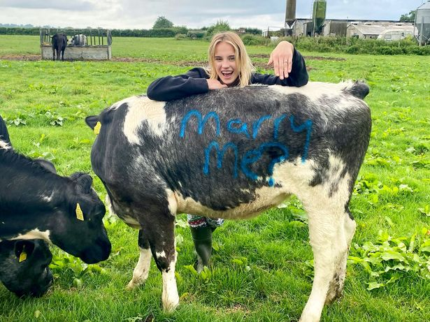 Love moooves in mysterious ways for engaged Somerset duo