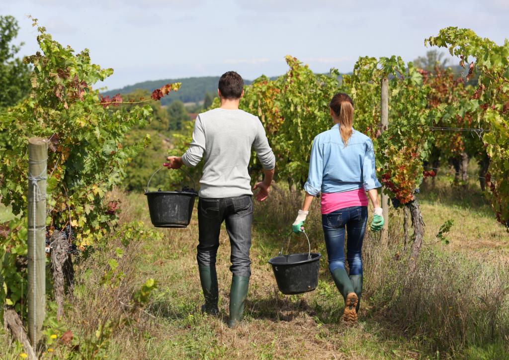Vineyard volunteering offers a vintage date idea.