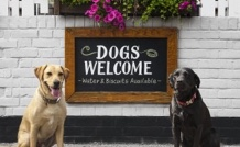 dog lover dating site uk On these dating sites, a passion for pets will help you find more than run-ins with dates from sites that don't cater to animal lovers — once a.
