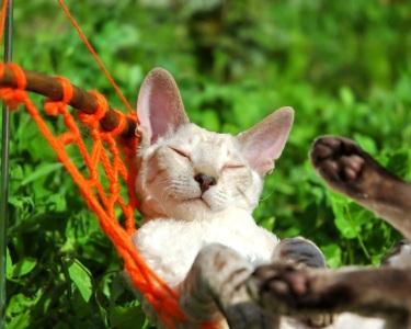 Deixe o Seu Gato ir de Férias! 1, 2 ou 3 Nts em Hotel Felino | Porto