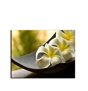 Quadro de Lona Flores Brancas | 80 X 60