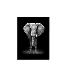 Quadro de Lona Elefante | 80 X 60
