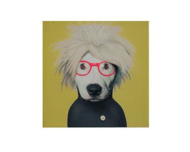 Tela 1 Peça Dog Glasses 30X30