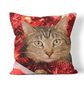 Almofada Combo | Gato