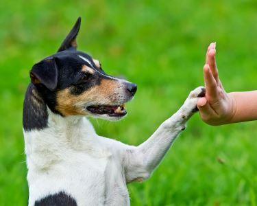 Treino p/ Todos os Cães e Idades | Um Mimo p/ Amigo de 4 Patas | Porto