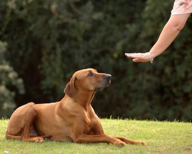 4 Aulas de Obediência para o Amigo de 4 Patas | COMtakto