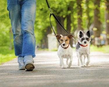 Aulas de Obediência Canina - Ensine o Seu Cão   COMtakto