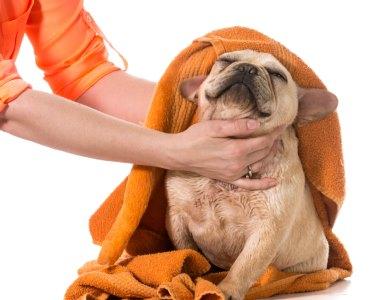 Banho e Tosquia com Estilo para Cão | Dog Store - Entrecampos