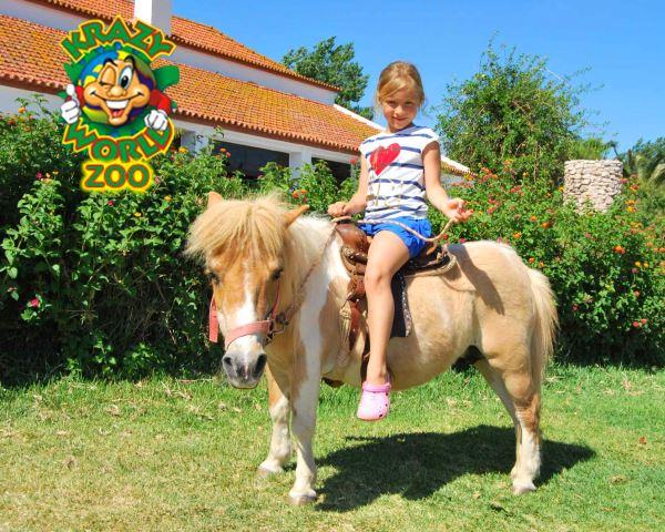 Krazy World Zoo   Dia de Máxima Diversão na Natureza! Algarve
