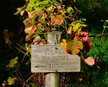 A Beleza de Colares | Percurso Pedestre c/ Prova de Vinhos | 3h