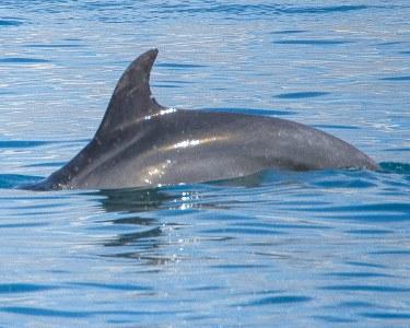 Rota dos Golfinhos no Rio Sado   Cruzeiro Get Zen® - 3h   Criança ou Adulto