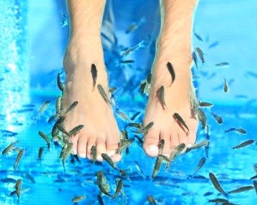 Pedicure 100% Natural - Peixes Garra Rufa | Até 5 Sessões | Encarnação
