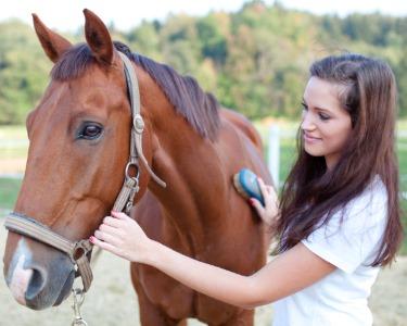Hipoterapia e Equitação Terapêutica: 1 ou 3 Sessões | Coudelaria Qta Oliveira