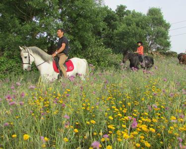 Fantástico Passeio a Cavalo pela Lezíria do Tejo | 1 Hora | 1 ou 2 Pessoas