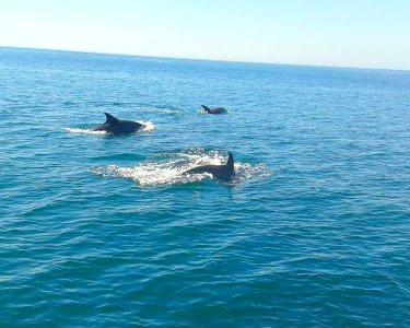 Rumo aos Golfinhos | Passeio de Barco a Dois pela Costa da Arrábida