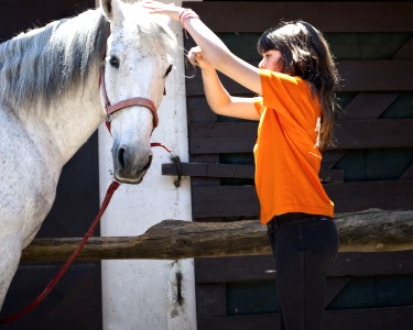 Baptismo a Cavalo + Visita à Quinta + Piquenique para Dois | Aveiro
