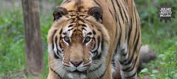 Diversão em Família! 2 Noites + Entradas para o Badoca Safari Park | Refúgio das Origens