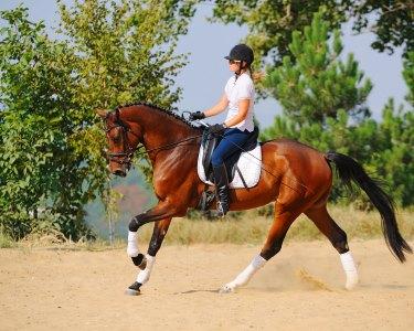 Aprenda a Andar a Cavalo! 1 Mês de Equitação - Lusitanos Academy | Sintra