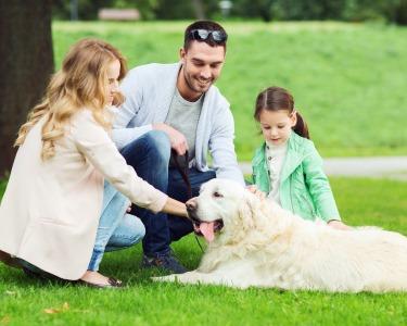 Pet & Family | Sessão Fotográfica Exterior - 1 Hora | 100 Fotografias