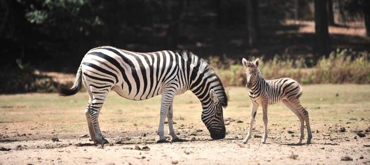 1 ou 2 Noites & Entradas no Badoca Safari Park | Hotel Rural Monte da Lezíria | Litoral Alentejano