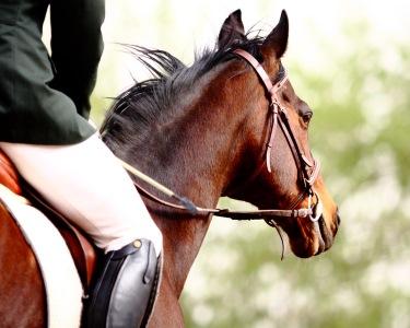 Equitação em Sintra | Aprenda a Andar a Cavalo! - 1 Mês de Aulas