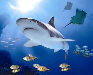 Sea Life   2 Entradas Adulto