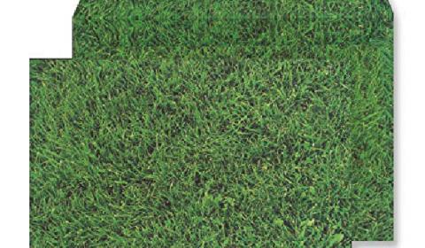 C5 Peel and Seal Envelopes - Fresh Mown Grass